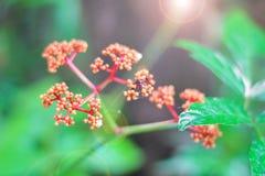красный цвет листьев цветка зеленый Стоковые Изображения