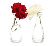 Красный цвет и белая роза Стоковое фото RF