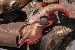 Красный цвет и золото черепа козы Стоковые Фото