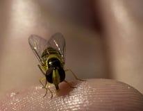 Красный цвет и муха или пчела желтого цвета Стоковые Фотографии RF