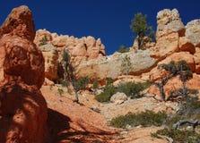 красный цвет каньона после полудня Стоковое фото RF