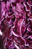 красный цвет капусты близкий вверх Стоковое фото RF