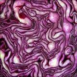 красный цвет капусты Стоковое Фото