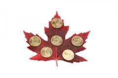 красный цвет клена листьев монеток Стоковое Изображение