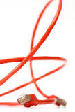 красный цвет компьютерной сети кабеля Стоковые Фото
