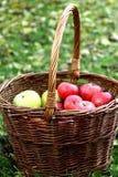 красный цвет корзины яблок Стоковая Фотография