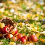 красный цвет корзины яблок Стоковые Фото