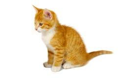 красный цвет кота Стоковое Изображение