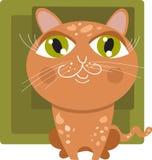 красный цвет кота Стоковые Фото
