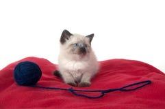красный цвет котенка одеяла милый Стоковая Фотография