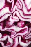 красный цвет крупного плана капусты Стоковая Фотография RF