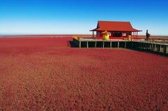 красный цвет ландшафта травы Стоковые Фотографии RF