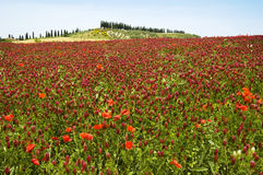 красный цвет ландшафта цветка стоковое изображение