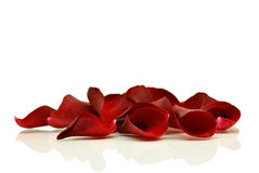красный цвет лепестков поднял Стоковые Фото