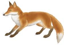 красный цвет лисицы иллюстрация вектора