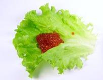 красный цвет листьев икры Стоковые Фотографии RF