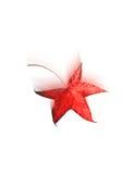 красный цвет листьев осени понижаясь иллюстрация штока