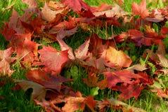 красный цвет листьев осени Стоковая Фотография RF