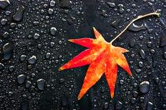 красный цвет листьев падений Стоковые Изображения RF