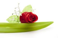красный цвет листьев поднял Стоковая Фотография