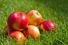 красный цвет лужайки яблок свежий Стоковые Изображения RF