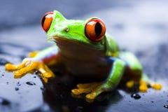 красный цвет лягушки глаза Стоковые Фотографии RF