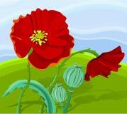 красный цвет мака Стоковые Изображения