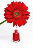 красный цвет маникюра цветка Стоковое фото RF