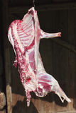 красный цвет мяса овечки крюка сырцовый Стоковое Изображение