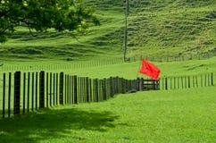 Красный цвет на зеленом цвете Стоковое фото RF