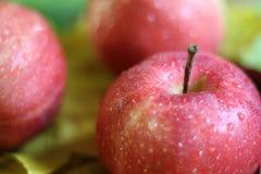 Красный цвет нескольких яблок зрелый с водой или дождем падает конец-вверх на коричневом цвете деревянного стола Стоковые Фотографии RF