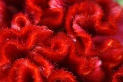 красный цвет окаимленный цветком Стоковое фото RF