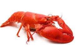красный цвет омара Стоковое Фото