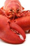 красный цвет омара Стоковое Изображение RF