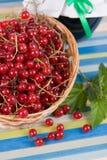 красный цвет опарника варенья смородины Стоковое Изображение