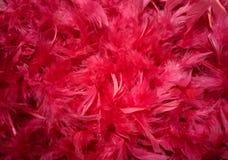 Красный цвет оперяется предпосылка оперения стоковые фотографии rf