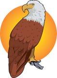 красный цвет орла Стоковые Фото