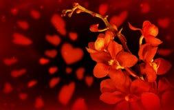 красный цвет орхидеи влюбленности предпосылки Стоковые Фото