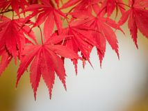 красный цвет осени стоковые изображения rf