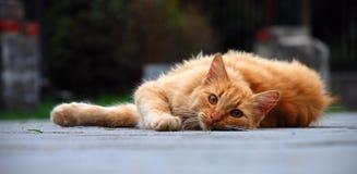 красный цвет охотника Стоковые Фото