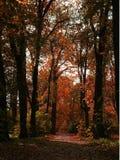 красный цвет падения Стоковая Фотография RF