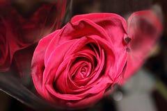 красный цвет пакета поднял Стоковая Фотография