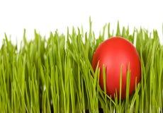 красный цвет пасхального яйца изолированный травой стоковые фотографии rf