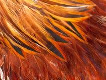 Красный цвет пера петуха текстуры Стоковые Изображения RF