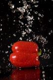 красный цвет перца брызгает воду Стоковая Фотография