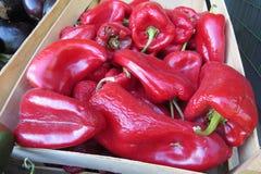 красный цвет перца колокола Красный болгарский перец Стоковое фото RF