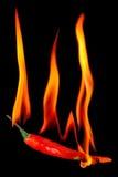красный цвет перца пожара chili Стоковое Фото