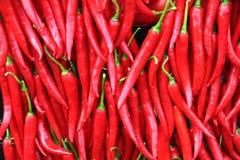 красный цвет перца предпосылки Стоковая Фотография RF