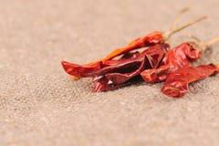 красный цвет перца чилей Стоковое Изображение