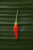 красный цвет перца Чили Стоковые Изображения RF